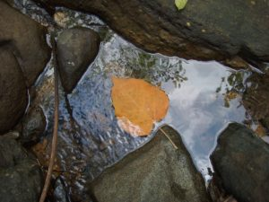 Costa Rica, Uvita, water, creek, lead, reflection