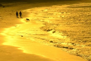 Walk-Dog-Beach