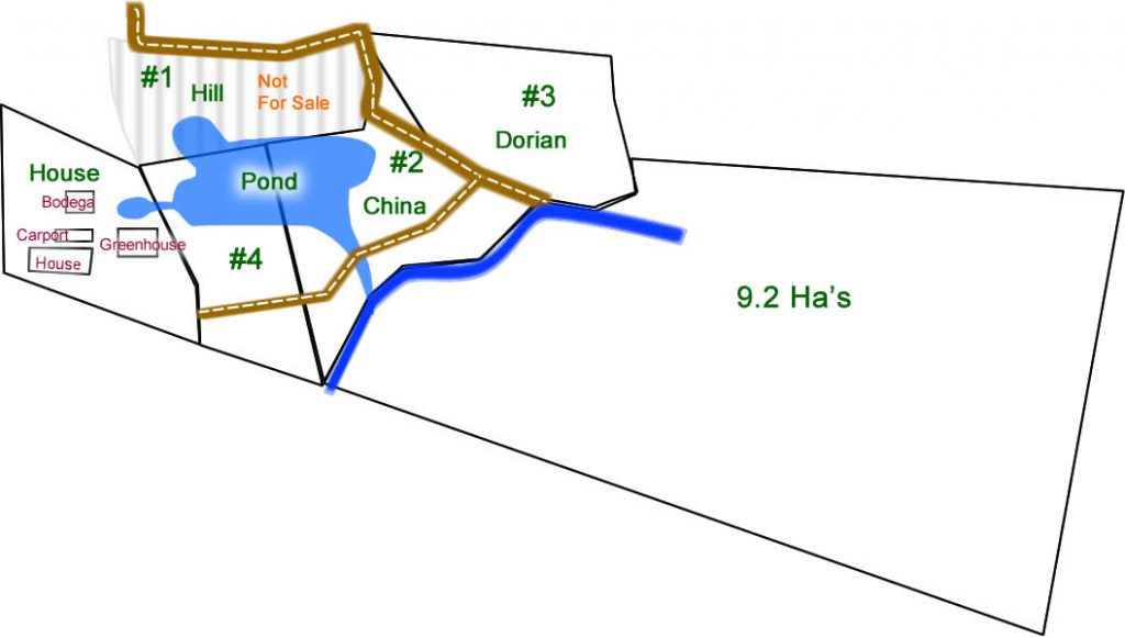 Layout of lots and features